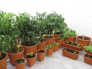 imagen www.huertodomestico.com