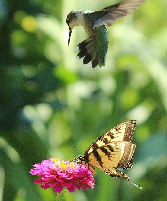 Mariposas y aves en tu jard n for Aves de jardin