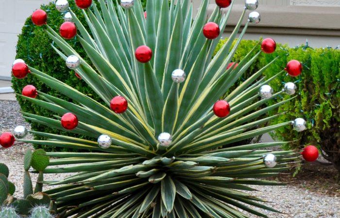 La navidad y los jardines